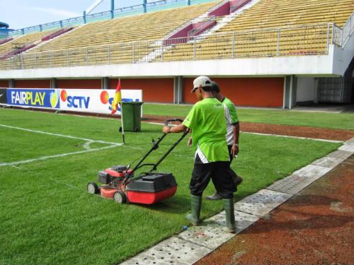 jenis rumput lapangan sepakbola